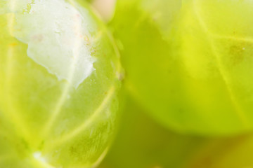 gooseberry close up