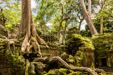 Historical complex of Ta Prohm temple near Siem Reap in Cambodia Fototapete