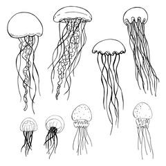 Jellyfish. Vector sketch  illustration.