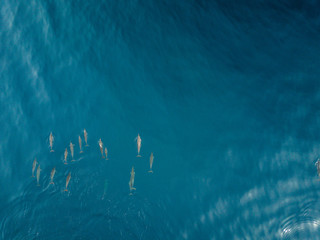 Dolphins from DJI Drone View