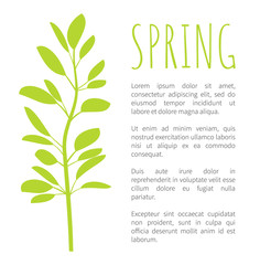 Spring Info Poster with Oval Leaves on Branch