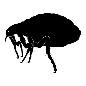 Vector image of flea silhouette