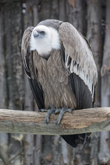 Vulture sitting on a branch.