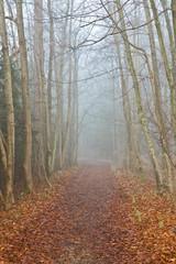 Einsamer Weg im Herbst bei Nebel - Depression