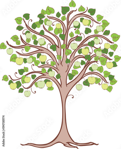 Apple Tree With Green Apples Stock Image And Royalty Free Vector