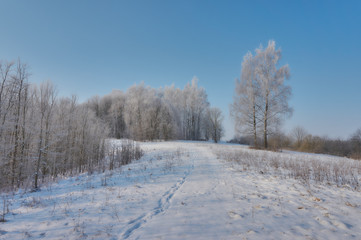 White frost on trees