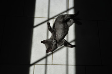 the little gray cat lying on the floor in the shadow of the window