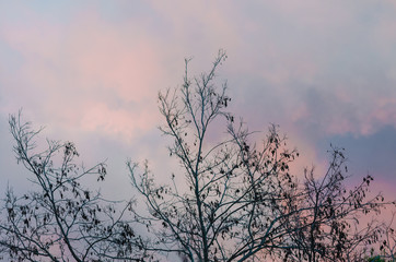 Photograph of the branches of a tree with colorful sky by sunset background.