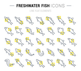 Set Vector Line Icons of Freshwater Fish