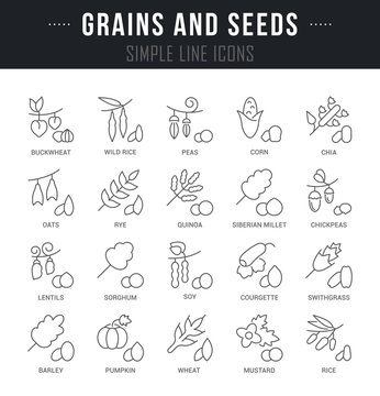 Set Vector Line Icons of Grains and Seeds.