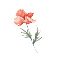 The image of a poppy. Hand draw watercolor illustration.