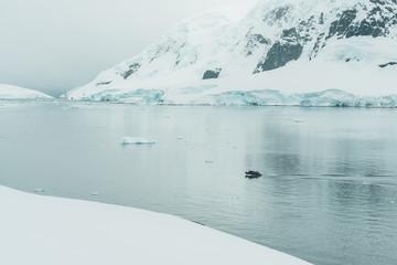 Rubber Dinghy cruising through the Ice - Antarctica