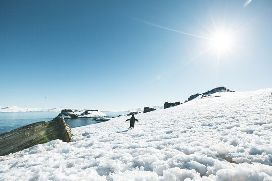 Adelie Penguin waddling around a Shipwreck - Antarctica