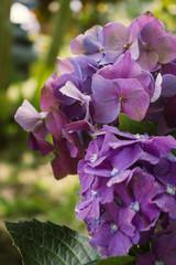 Flores de Junín