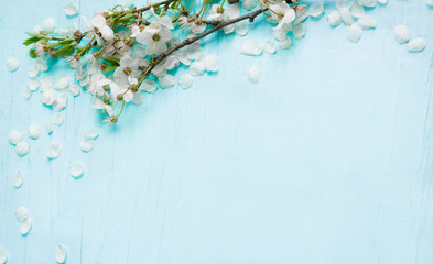 Rustic Nature background with Cherry tree flowers