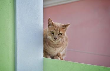 Gato no muro de uma casaç