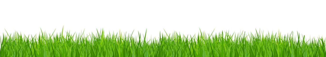 Green grass, nature background - for stock