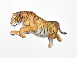 3d rendering of Siberian tiger also known as the Amur Tiger on whie