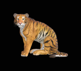 3d rendering of Siberian tiger also known as the Amur Tiger on black back ground