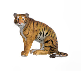 3d rendering of Siberian tiger also known as the Amur Tiger