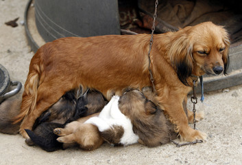 mother with her puppy