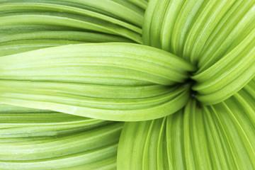 Green leaf texture, nice green leaf background