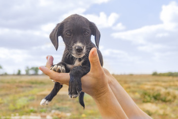 Black puppy in the hands of male against the background of the steppe in autumn