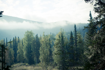 Mountain view from the valley with a pine forest. National Park, nature reserve Kuznetsky Alatau.