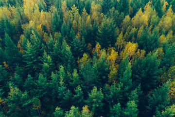 aerial shot of autumn forest landscape