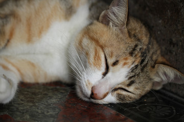 close-up Tabby cat relaxation on stone floor, napping, fluffy kitten sleeping, Pet shop advertisement