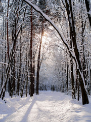 Picture of picturesque snowy landscape in woods