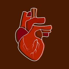 Stylized human heart anatomy icon. Modern flat cartoon style, bright and cute.
