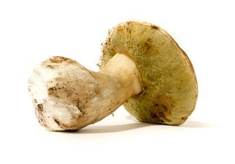 Porcini mushroom.