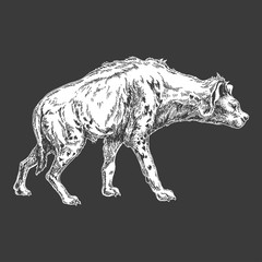 Hyena. Zoo. African fauna. Hand drawn illustration for tattoo design, emblem, badge, t-shirt print. Engraving of wild animal. Classic vintage style image.