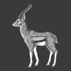 Zoo. African fauna. Roe deer, deer, fallow deer, antelope. Hand drawn illustration for tattoo design, emblem, badge, t-shirt print. Engraving of wild animal. Classic vintage style image.