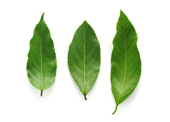 Tree fresh green bay leaves isolated on the white background