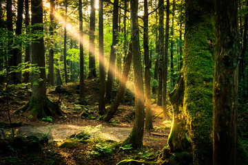 The suicide forest near mount Fuji, japan