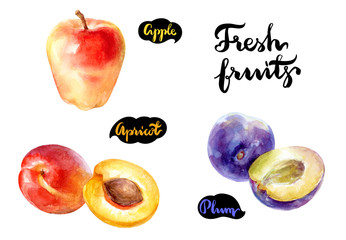 Fresh fruits watercolor illustration. Apple, apricot, plum isolated on white background.