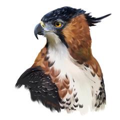Ornate hawk-eagle watercolor painting