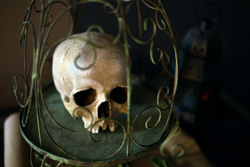 The human skull in the birdcage. Gothic concept. Vanitas