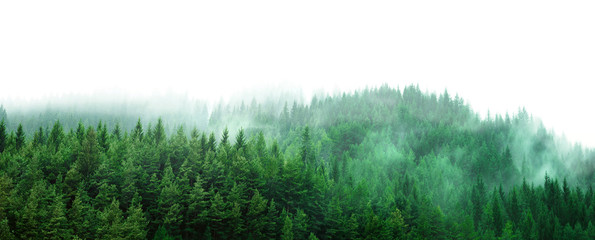 Garden Poster Forest green forest with mist and clear blank space