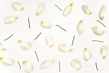 Top view of tulip petals on white background