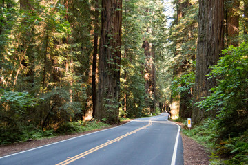 The Avenue of the Giants is a scenic highway in Northern California, U.S.A., running through Humboldt Redwoods State Park.