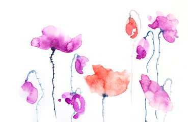 Watercolor painting of red and purple poppy flower on white background