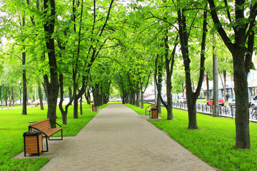 Beautiful park with many green trees. Spring walk