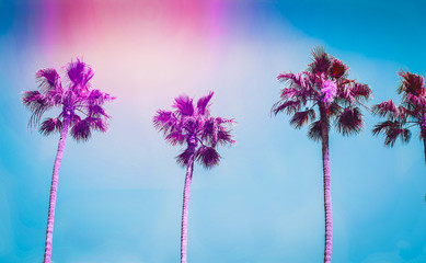 Photo sur Aluminium Los Angeles Ultra violet palms in the city of Los Angeles. Toning