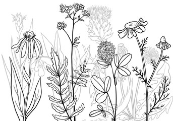 vector medical plants