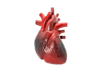 Human heart disease model on white background