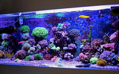 Keuken foto achterwand Koraalriffen Saltwater reef aquarium