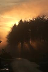 Foggy autumn Sunset